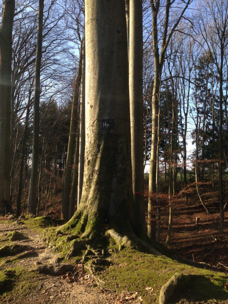Baum mit dem Hinweis Hasenpatt