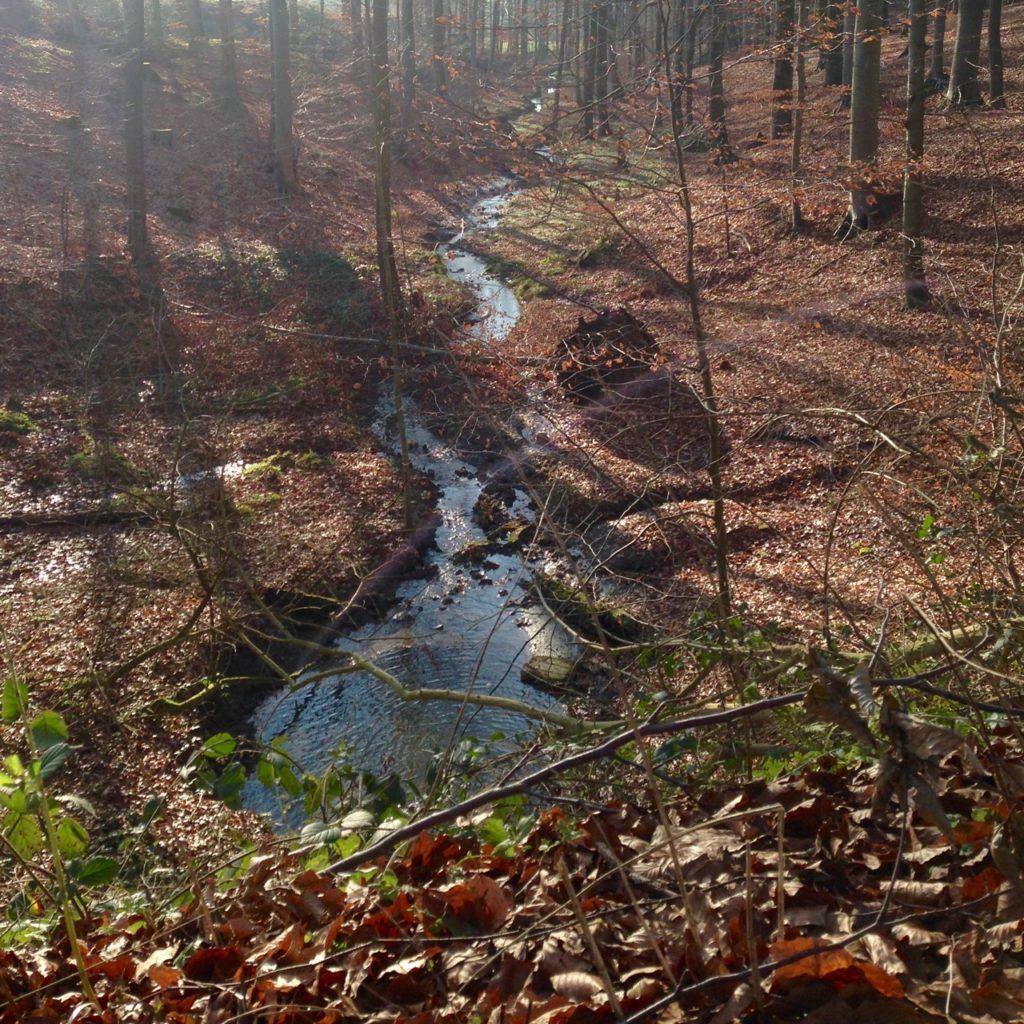 kleines Bächlein im Wald am Hasenpatt