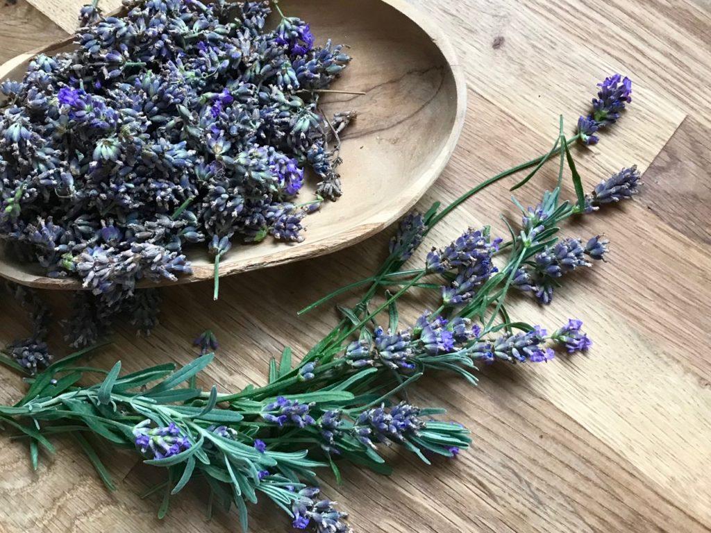 Lavendelblüten für Lavendelsäckchen aus Teebeuteln in einer Schale