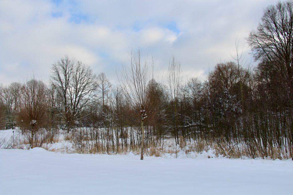 Schneelandschaft, im Hintergrund sind Bäume und Sträucher